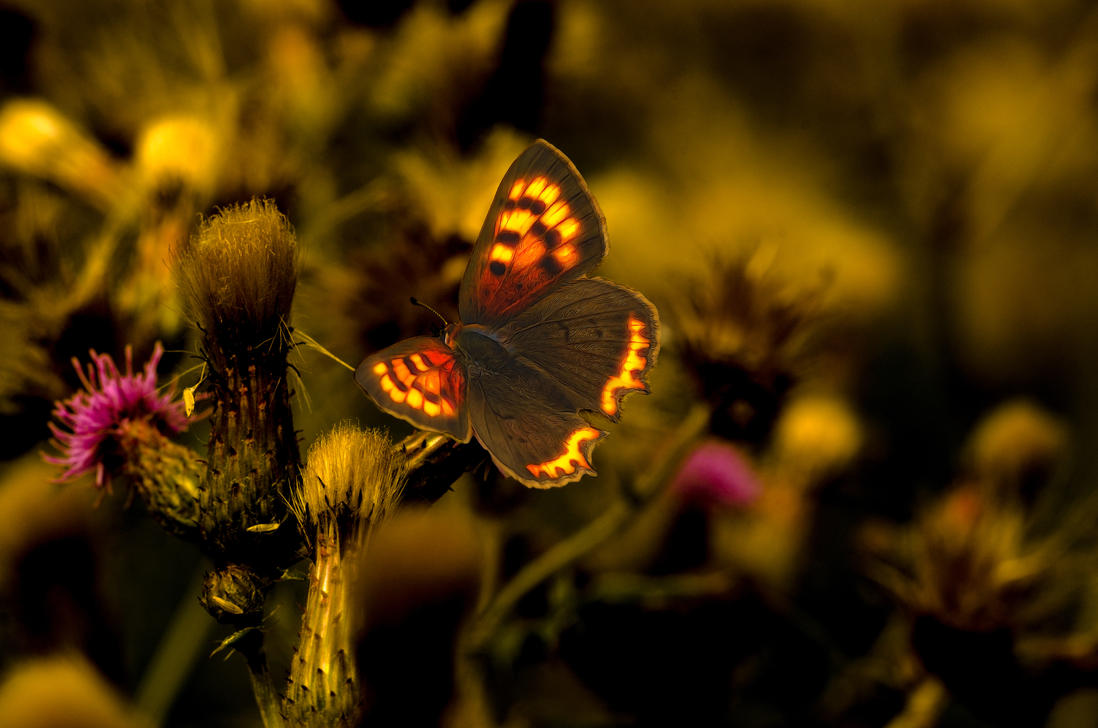 CopperButterfly by Johndoop