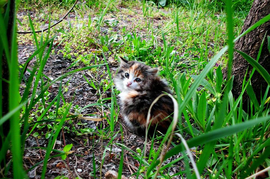 kitten by ANDMAiYESi1986
