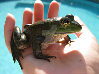 A Frog In The Hand