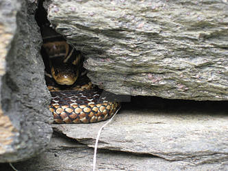 Snake In The Wall