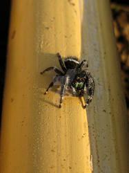 Plush Spider