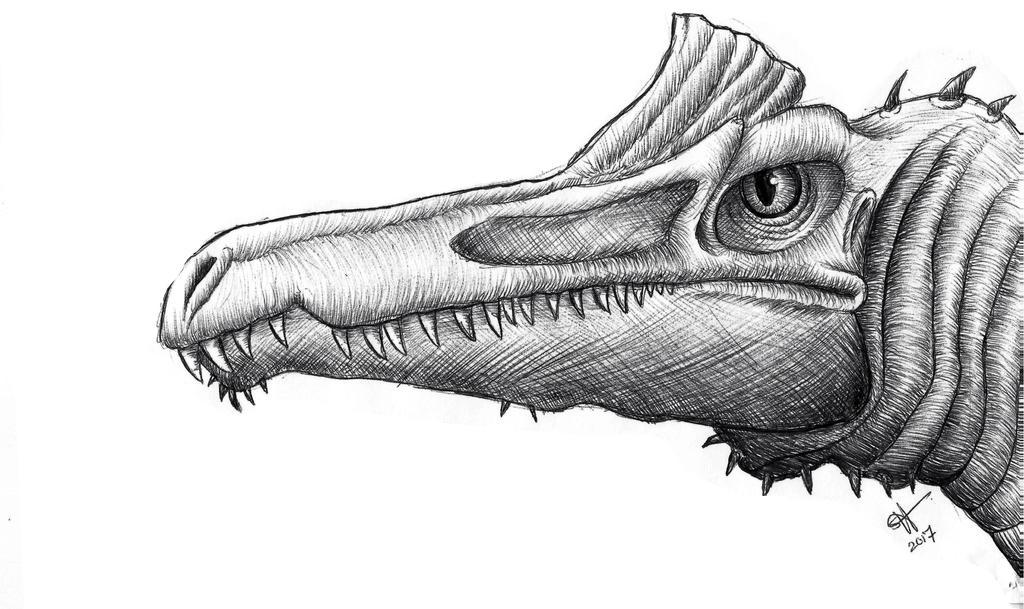 Spinosaurus aegyptiacus by Celestial-Rainstorm