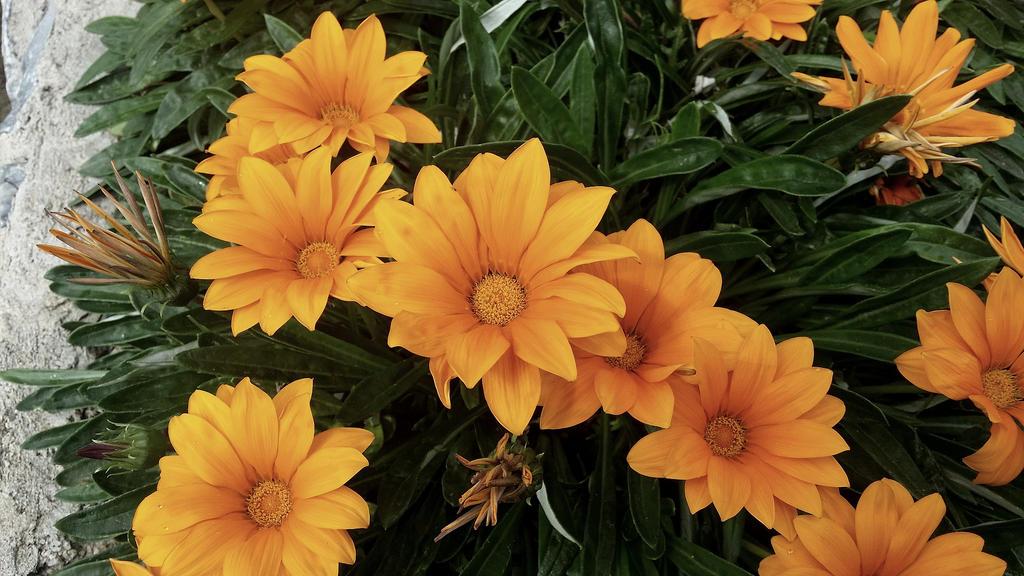 Orange flower by kovlaci86