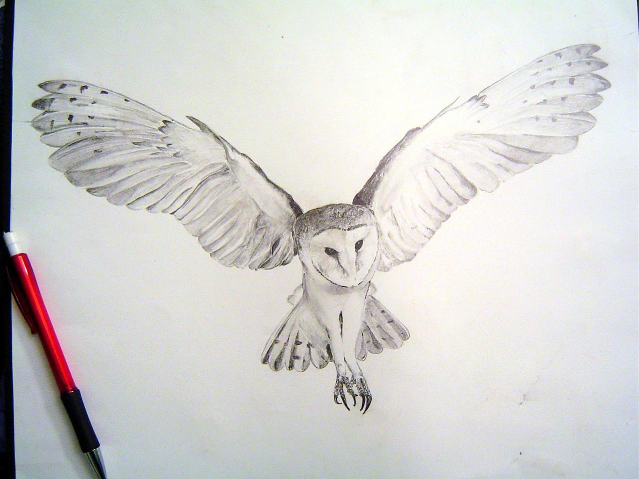 Barn Owl Tight Render by Tophoid on DeviantArt