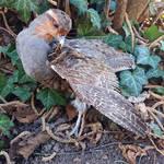 Partridge softmount