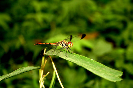 Dragonfly can't change everything...