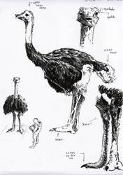 Ostrich Study by Insalival