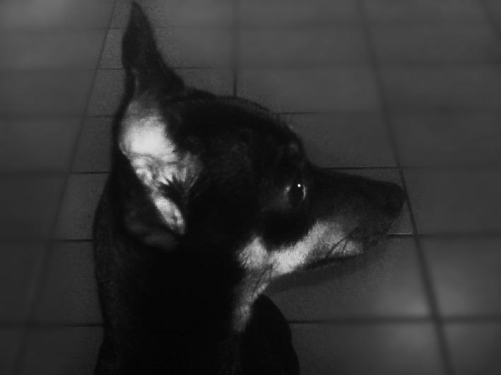 _Pincho_ by drearetro