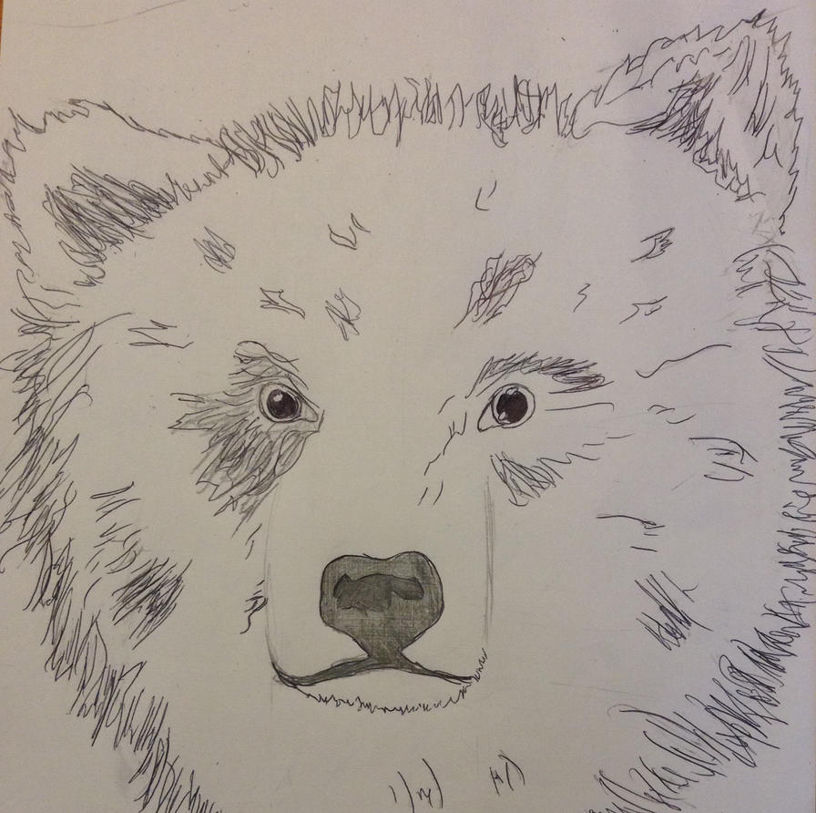 Juvenile bear by TheGreenNightingale