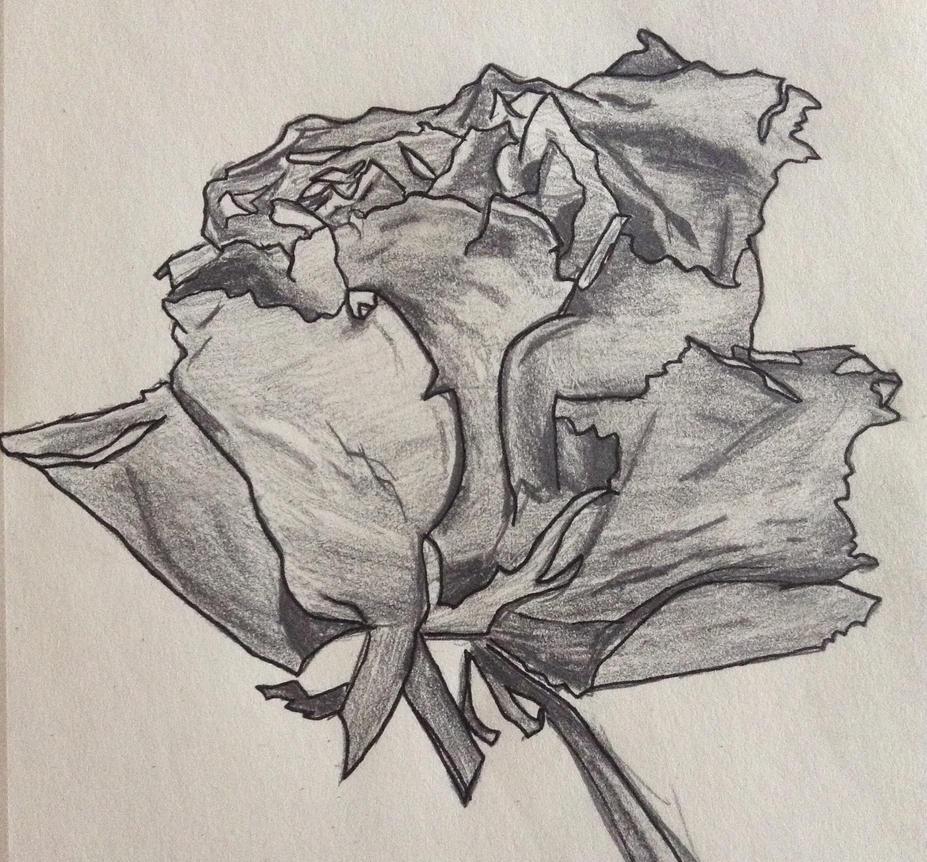 Dried Rose by TheGreenNightingale