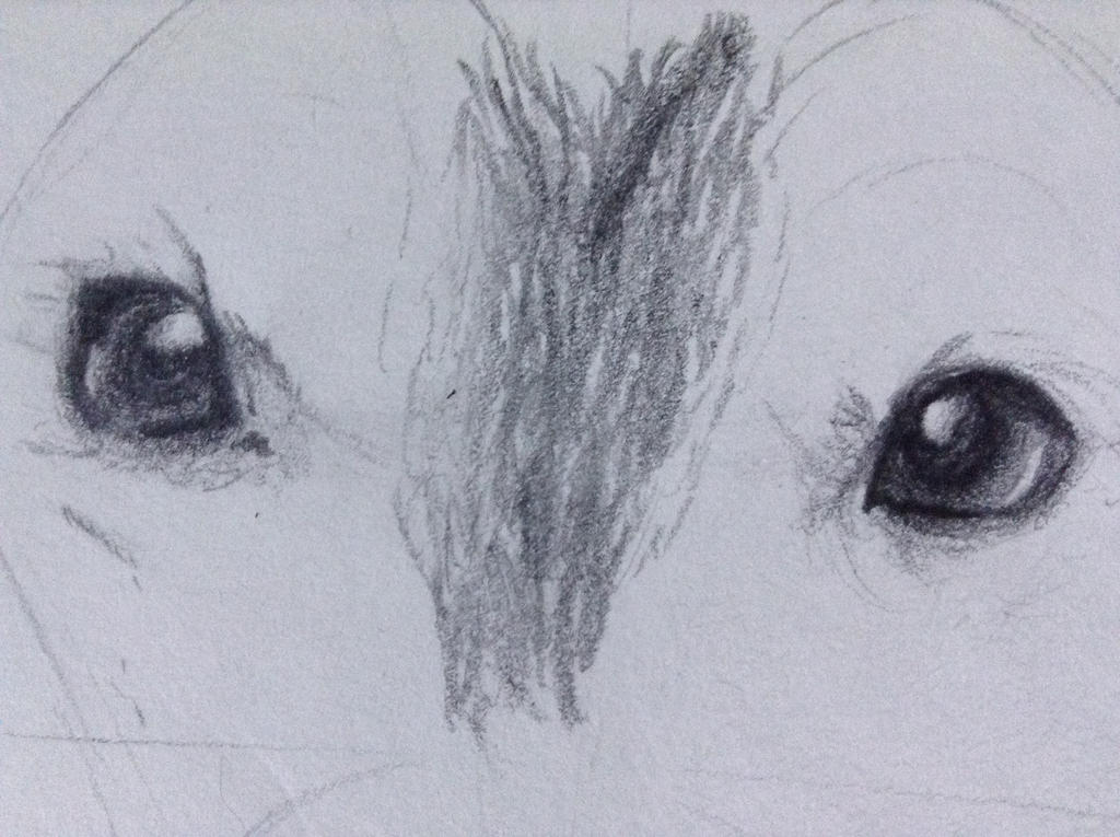 Eyes- Update by TheGreenNightingale