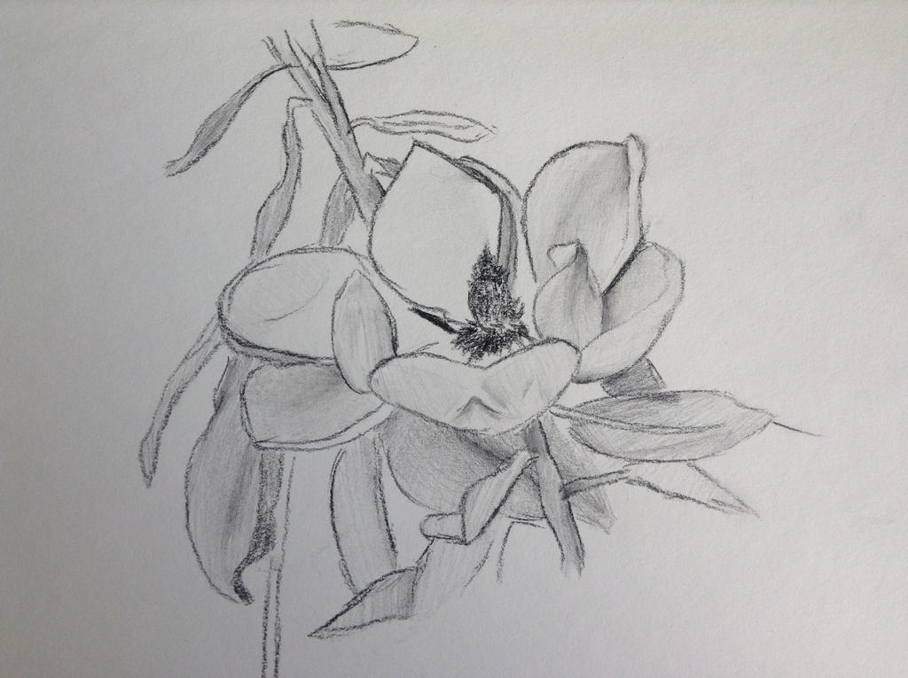 Magnolia by TheGreenNightingale