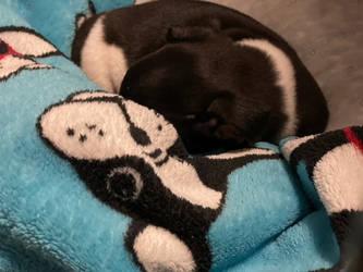 Kara sleeping on her blanket