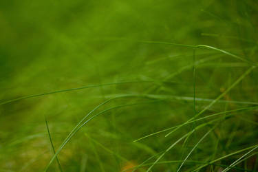 grass by janbk