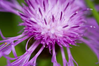 flower closeup by janbk