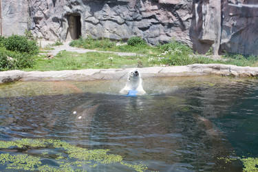 icebear by janbk