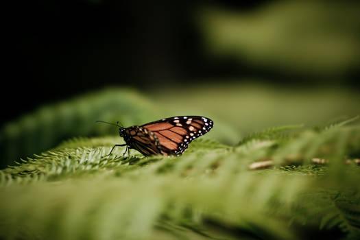 Butterfly on Treefern