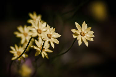 Spring Flowers 04 by alvse