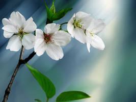 oriental cherry by snowitchie