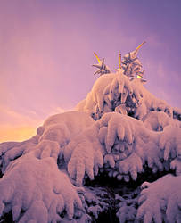 Snow Monster by maxre