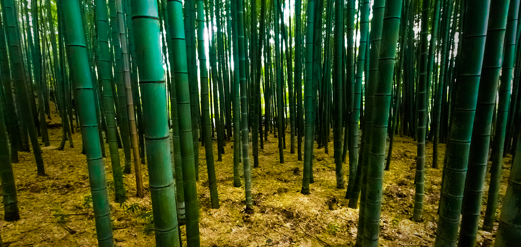Bamboo by maxre