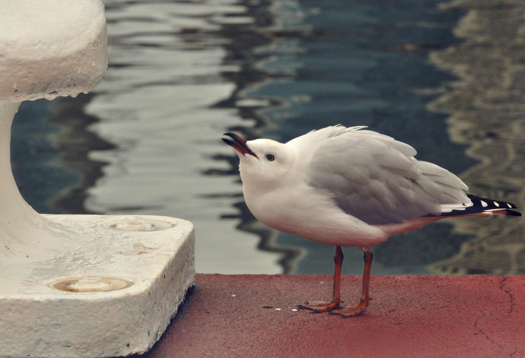 young Seagull by PACHICRAZY