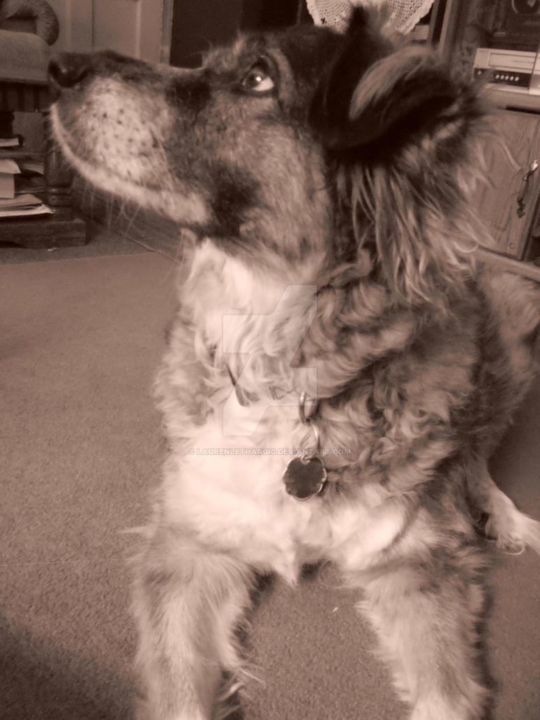 Dog Lethargic And Weak After Kennel Parvo
