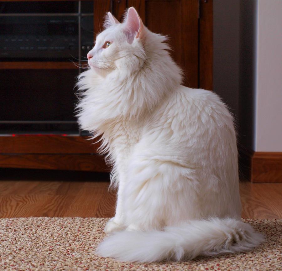White Cat 08 by brenbren