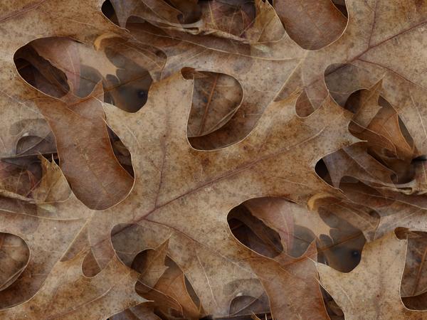 Seamless Tile - Leaves by brenbren