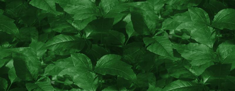 Tiled Green Leaves