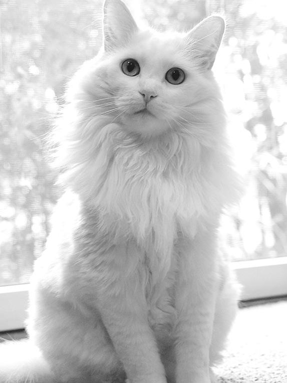 Angel Kitty by brenbren