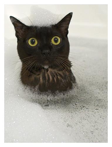 Cat in bath LOLOLOL by unacceptablee
