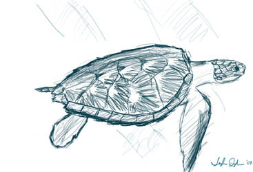 Sketch-a-Day - Turtle