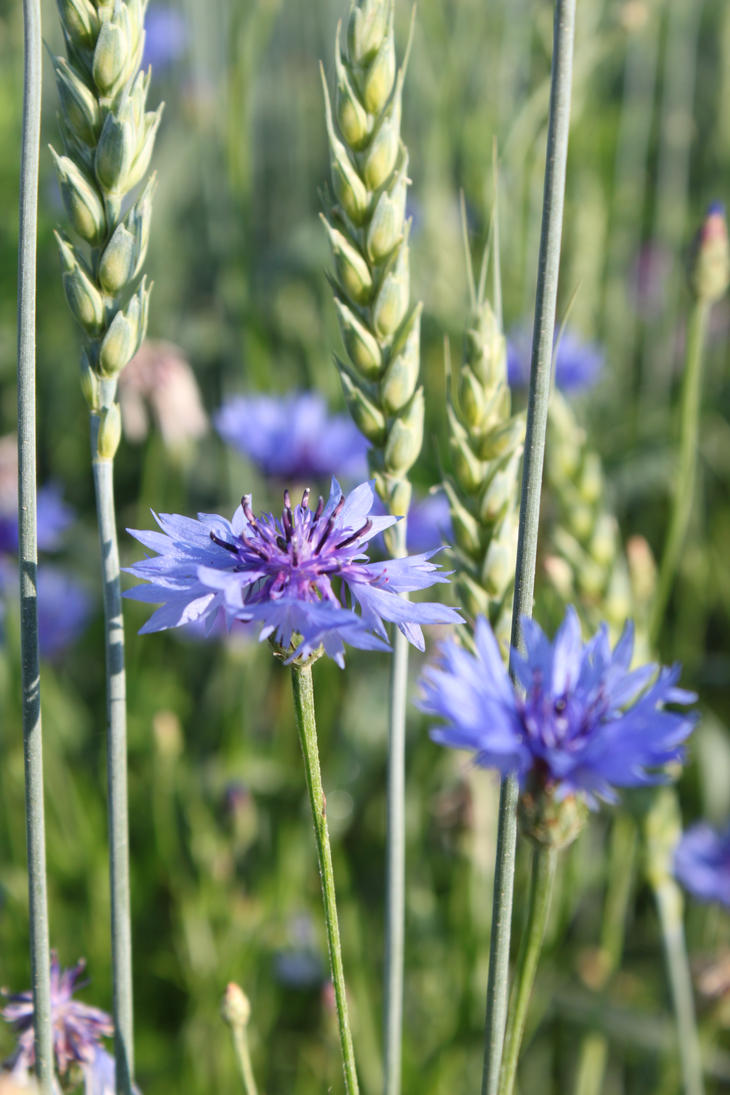 Teardrop on the fire... by Zigyleaf