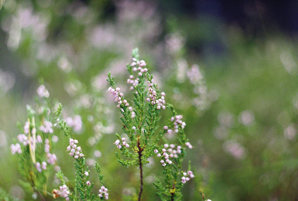 Bittersweet Nightmares by Zigyleaf