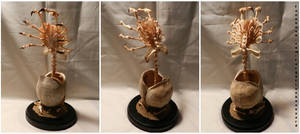 'Parasitoid' by Forgotten Boneyard (Tim Prince)