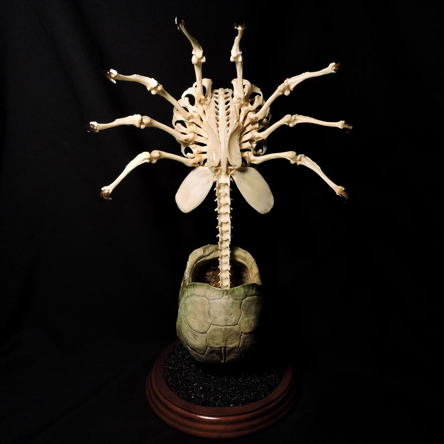 Alien Facehugger Skeleton Tribute by Tim Prince by ForgottenBoneyard