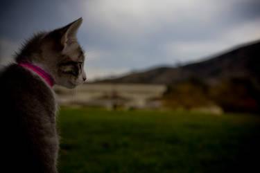 Curiosity killed the kitten by austinishardcore