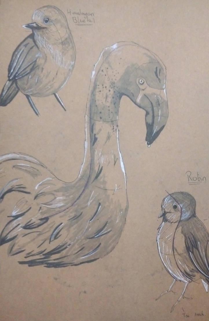 Uni Projects: Bird Study 2 by Betneybob