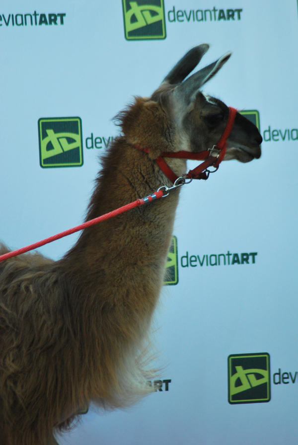 Even Moar Red Carpet Llama by lenavvargo
