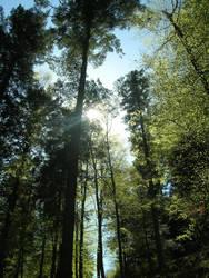 entre les arbres by Freddo67