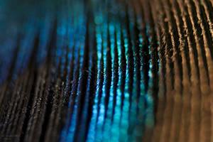 Pavo cristatus by yosh-dewd