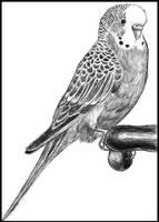 My birdie by Amarevia