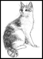 Sitting cat by Amarevia