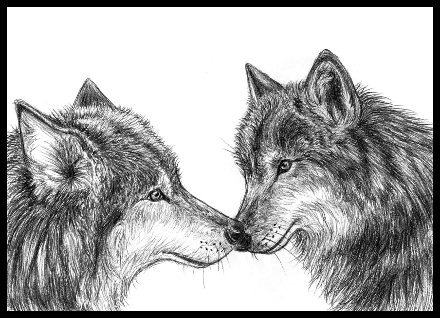Wolf mates by Amarevia...