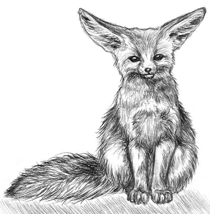 how to draw a realistic baby fox