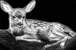 fawn by Amarevia