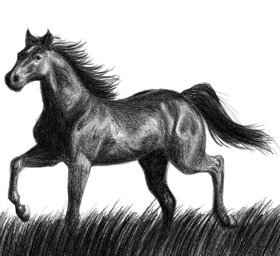 Black horse by Amarevia