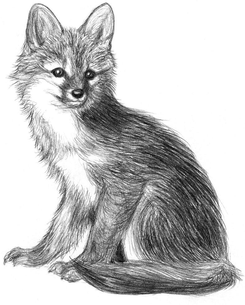 Little fox by Amarevia on DeviantArt