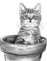 Kitty in flower pot by Amarevia